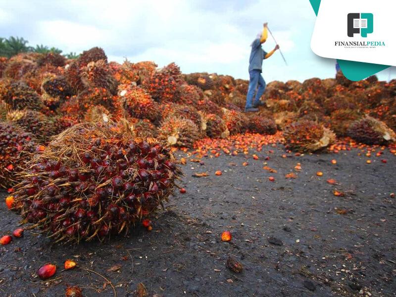 Revisi Tarif Ekspor CPO Untungkan London Sumatra